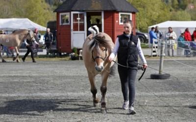 Fagseminar: Best mogleg hest – lengst mogleg