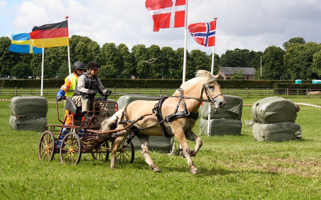 EM Fjordhest: Norsk sølv og bronse