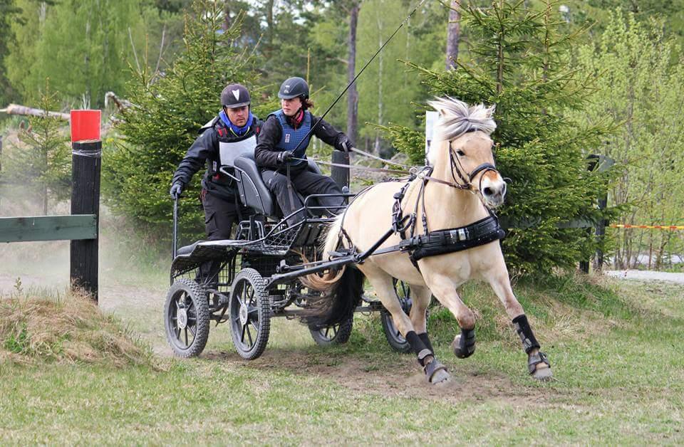 Lagoppsett for Norge under Nordisk mesterskap for fjordhest
