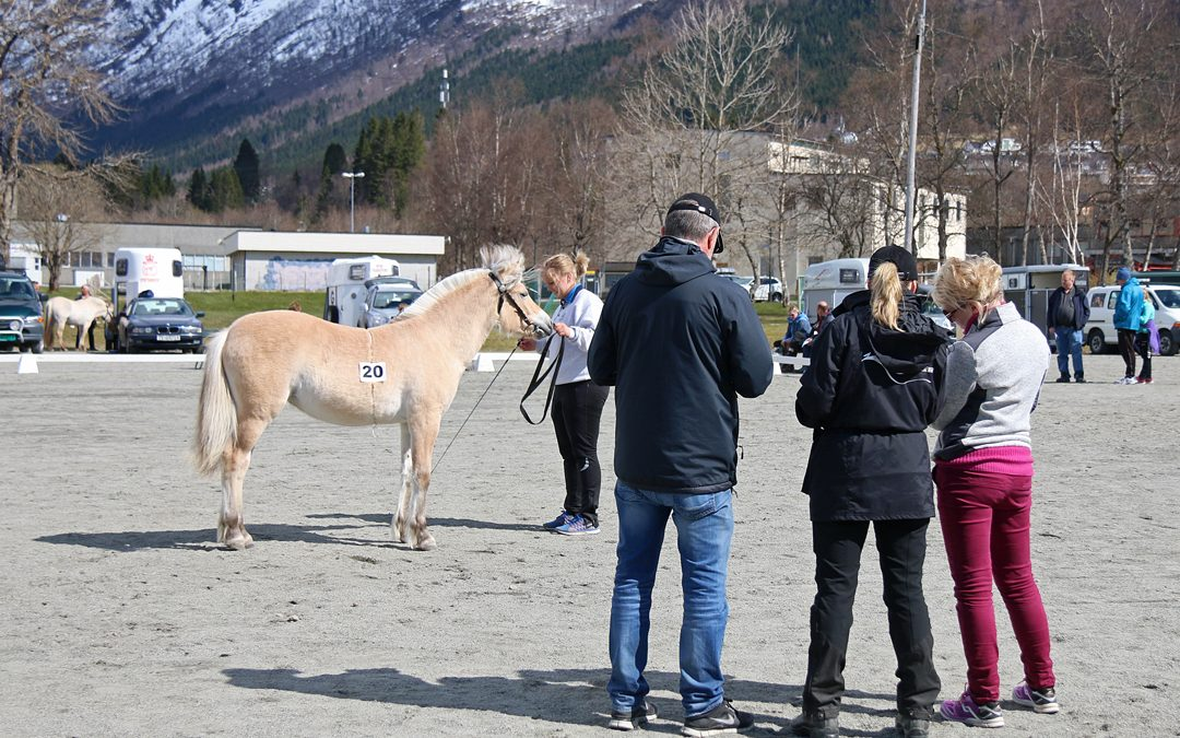 Norsk Hestesenter vil utdanne fleire dommarar