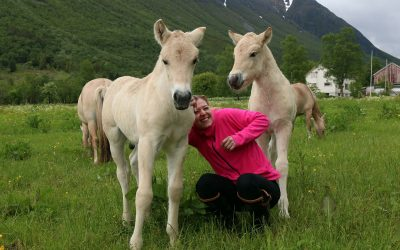 Korleis skape ein god brukshest? Del II – Kjøp av ny hest