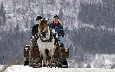 Julehelsing frå Norges Fjordhestlag