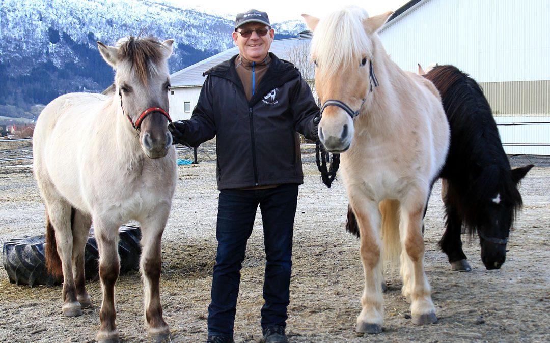 Nye unghestar på plass på Norsk Fjordhestsenter