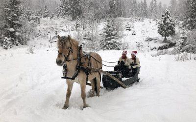 Julehelsing frå Norges Fjordhestlag og Norsk Fjordhestsenter